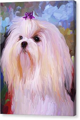 Maltese Portrait Canvas Print by Jai Johnson