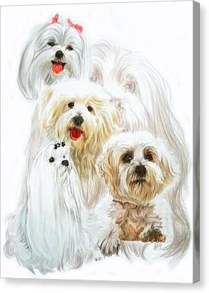 Maltese W/ghost Canvas Print by Barbara Keith