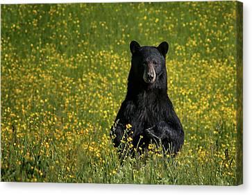 Mama Bear Canvas Print by Darylann Leonard Photography