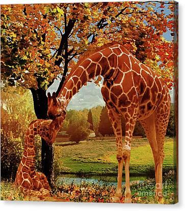 Mama Giraffe Feeding  Canvas Print by Gull G