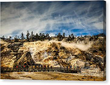 Cost Line Canvas Print - Mammoth Hot Springs by Jon Burch Photography