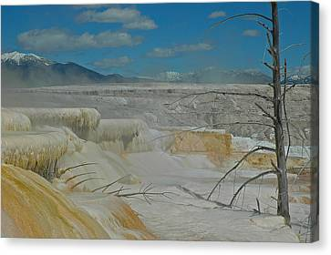 Mammoth Hot Springs Terrace In Yellowstone National Park Canvas Print by Bruce Gourley