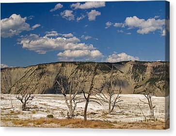 Mammoth Springs Sentinels Canvas Print by Charles Kozierok