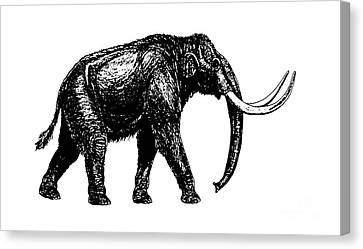 Mammoth Tee Canvas Print by Edward Fielding