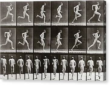 Man Running, Plate 62 From Animal Locomotion, 1887 Canvas Print