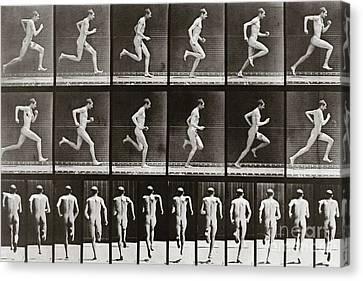 Sprinter Canvas Print - Man Running, Plate 62 From Animal Locomotion, 1887 by Eadweard Muybridge