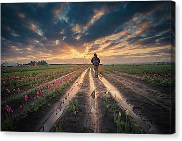 Canvas Print featuring the photograph Man Watching Sunrise In Tulip Field by William Lee