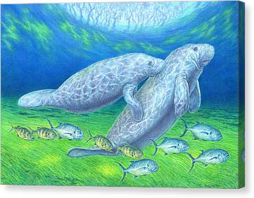 Manatee Spring Canvas Print by Tim McCarthy