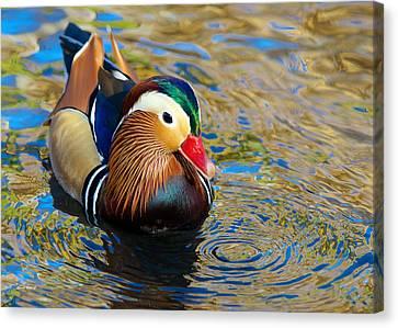 Mandarin Duck Swirls Canvas Print by Stephen  Johnson