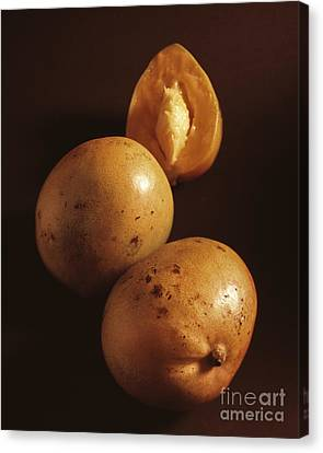 Mangos Canvas Print by Kim Lessel