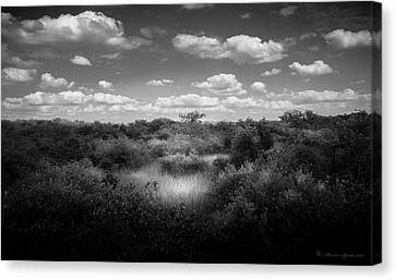 Mangrove Clearing Canvas Print
