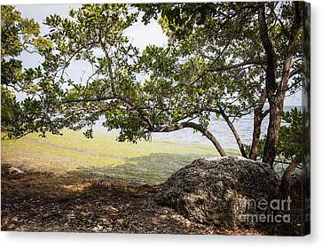 Mangrove Forest Canvas Print - Mangrove Forest by Elena Elisseeva