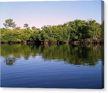 Mangrove Forest Canvas Print by Steven Scott