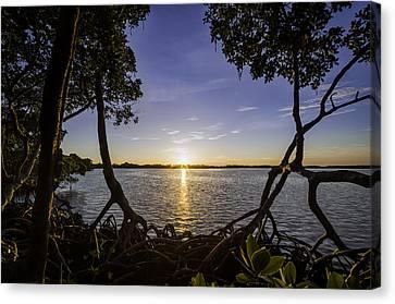 Mangrove Frame Canvas Print by Nick  Shirghio