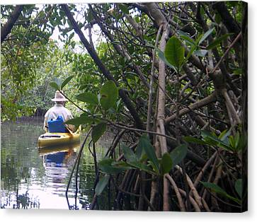 Mangrove Kayaker Canvas Print by Steven Scott