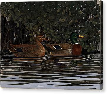 Mangrove Mallards Canvas Print by Timothy Tron