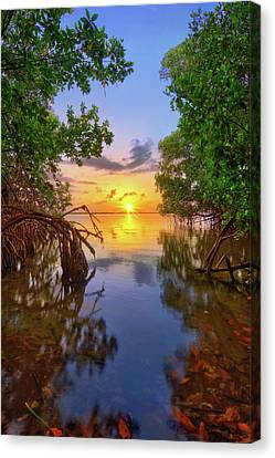 Mangrove Sunset From Jensen Beach Florida Canvas Print by Justin Kelefas