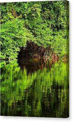 Mangrove Tunnel Canvas Print by Sarita Rampersad