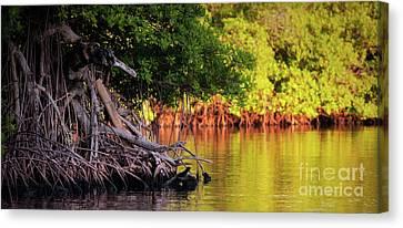 Mangroves Of Roatan Canvas Print by Doug Sturgess