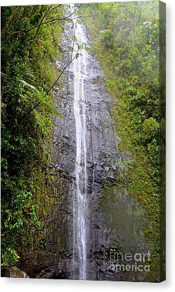 Manoa Falls - Honolulu Hawaii Canvas Print by Mary Deal