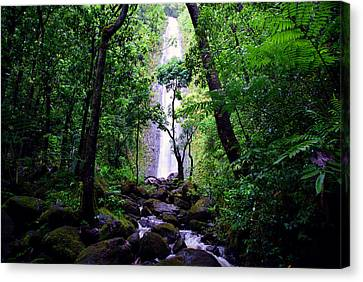 Manoa Falls Canvas Print by Kevin Smith