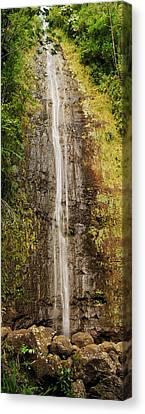Manoa Falls Canvas Print by Michael Peychich