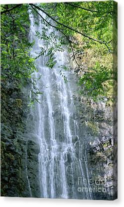 Manoa Valley Waterfall Canvas Print by Bill Brennan - Printscapes
