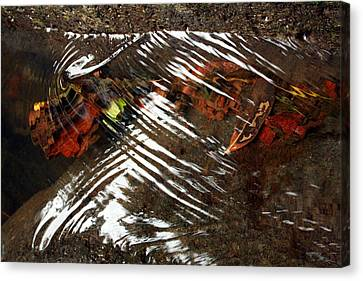 Manoa's Fallen Canvas Print