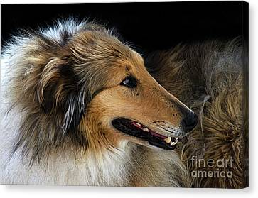 Canvas Print featuring the photograph Man's Best Friend by Bob Christopher