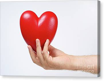 Man's Hand Holding Heart-shaped Object Canvas Print