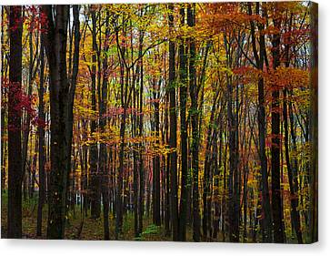 Canvas Print featuring the photograph Many Colors Of Autumn by April Reppucci