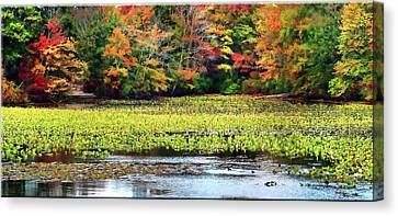 Many Colors Of Autumn Canvas Print
