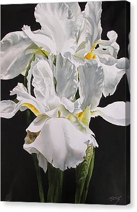 Many Shades Of White Canvas Print by Alfred Ng