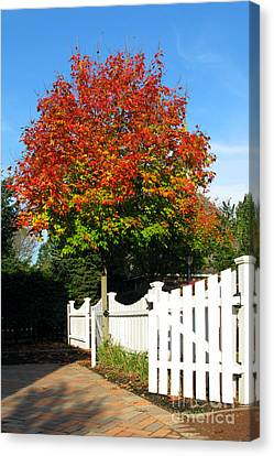 Maple And Picket Fence Canvas Print by Olivier Le Queinec