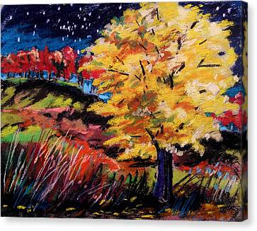 Maple At Night Canvas Print by John Williams