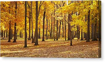 Canvas Print featuring the photograph Maple Glory by Francesa Miller