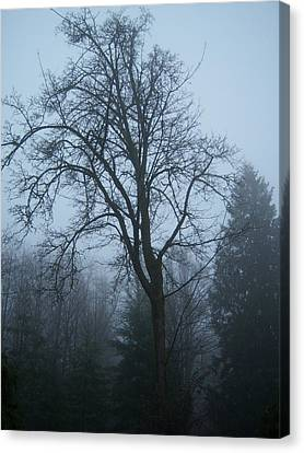 Maple In Fog Canvas Print by Ken Day