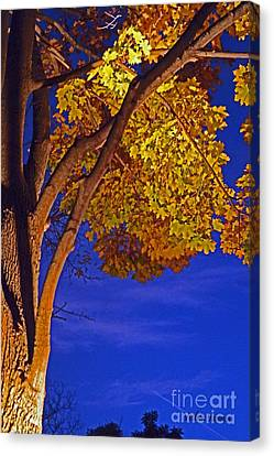 Long-lived Canvas Print - Maple In The Night by Violeta Ianeva