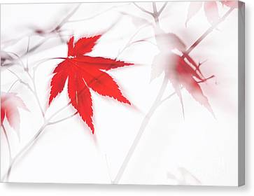 Maple Leaf Abstract 2 Canvas Print