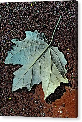 Maple Leaf.  Canvas Print by Andy Za