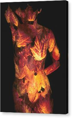 Maple Leaves Canvas Print by Arla Patch
