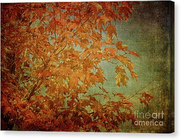 Canvas Print - Maple Leaves by Lois Bryan