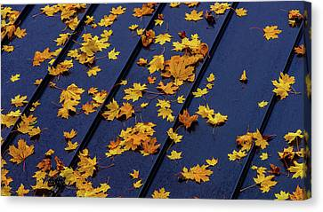 Maple Leaves On A Metal Roof Canvas Print