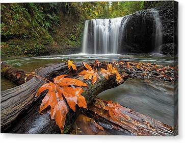 Canvas Print - Maple Leaves On Tree Log At Hidden Falls by David Gn