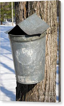 Maple Sap Pail Canvas Print by Larry Landolfi