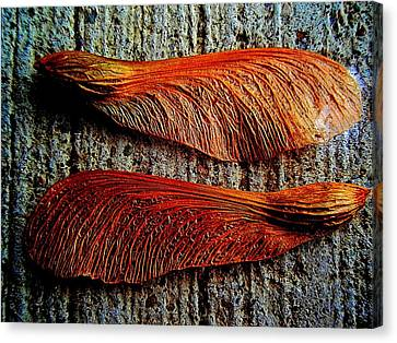 Maple Seed Pair Canvas Print