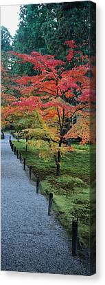 Maple Tree At The Roadside, Sanzen-in Canvas Print by Panoramic Images