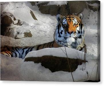 Pittsburgh Zoo Canvas Print - Mara by Lori Deiter