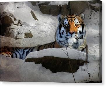 Mara Canvas Print by Lori Deiter