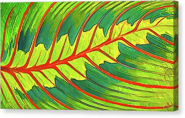 Maranta Red 2 Canvas Print by ABeautifulSky Photography